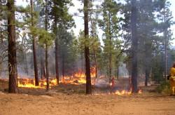 Le réchauffement climatique va provoquer de plus en plus de feux de forêt