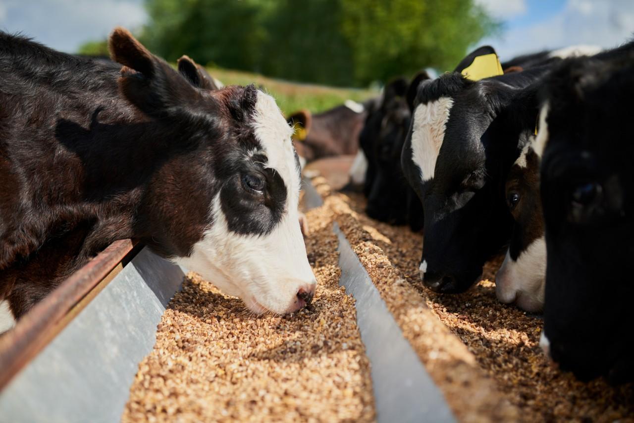 Réduire sa consommation de viande pour lutter contre le réchauffement climatique : est-ce utile?