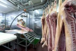 Maltraitance animale : l'ancien directeur et 4 employés de l'abattoir de Mauléon condamnés