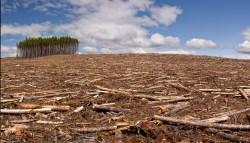 Lutter contre la déforestation et limiter son empreinte forêt