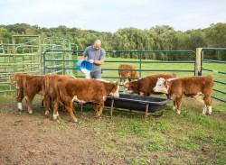 OGM interdits: 150 tonnes d'aliments pour bétail distribuées en France selon la DGCCRF