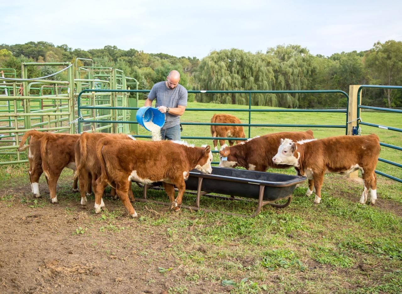 150 tonnes d'aliments pour animaux d'élevage interdites distribuées en France