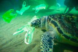 Déchets plastiques en hausse de 40% d'ici 2030 si aucune mesure n'est prise