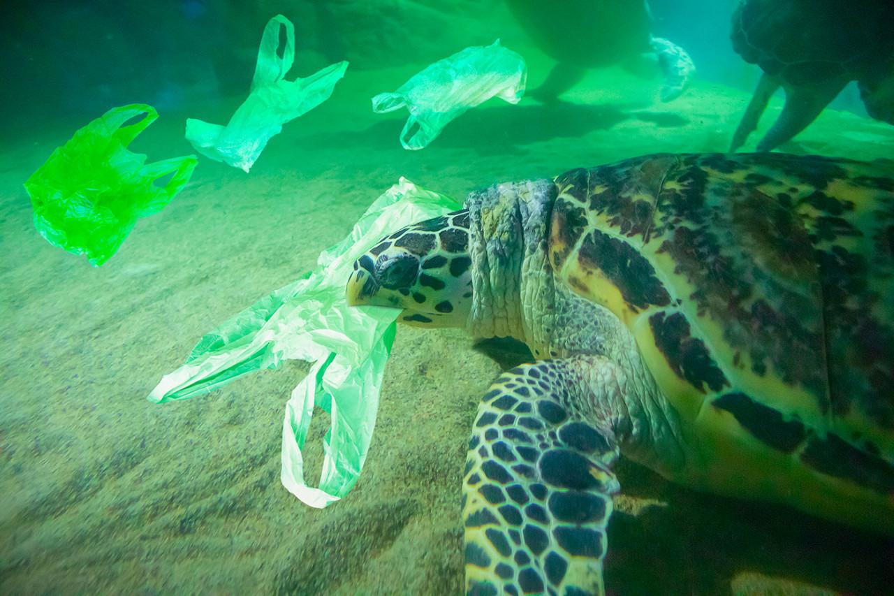 La WWF alerte sur une croissance de la pollution plastique de 40% d'ici 2030