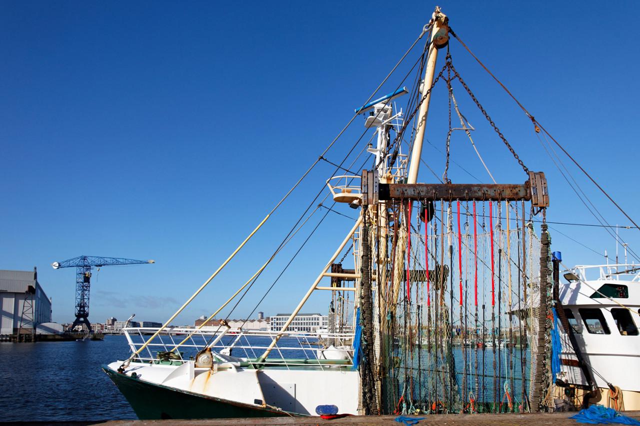 Interdiction de la pêche électrique dans l'UE à partir du 1er juillet 2021