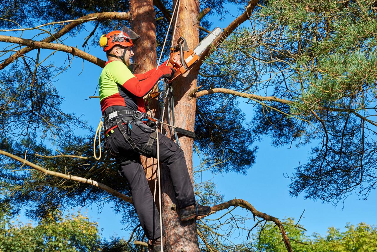Un maire peut-il pénétrer sur une propriété privée pour élaguer un arbre?