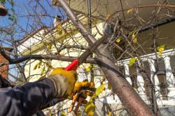 L'élagage d'un arbre peut être imposé par un voisin