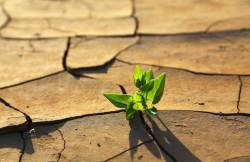 Les pistes du GIEC contre le réchauffement climatique
