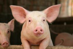 Les annonces du ministre de l'Agriculture en faveur du bien-être animal