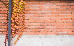 Risque d'effondrement d'un mur considéré comme trouble anormal de voisinage