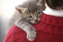 Amende de 135 € pour les propriétaires de chats sans puce ou tatouage