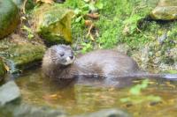Animaux: liste rouge des espèces menacées en France en 2017