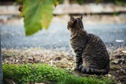 Propositions de l'Assemblée nationale pour améliorer la condition animale