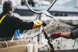 L'État condamné pour la prise accidentelle de mammifères marins dans les filets de pêche
