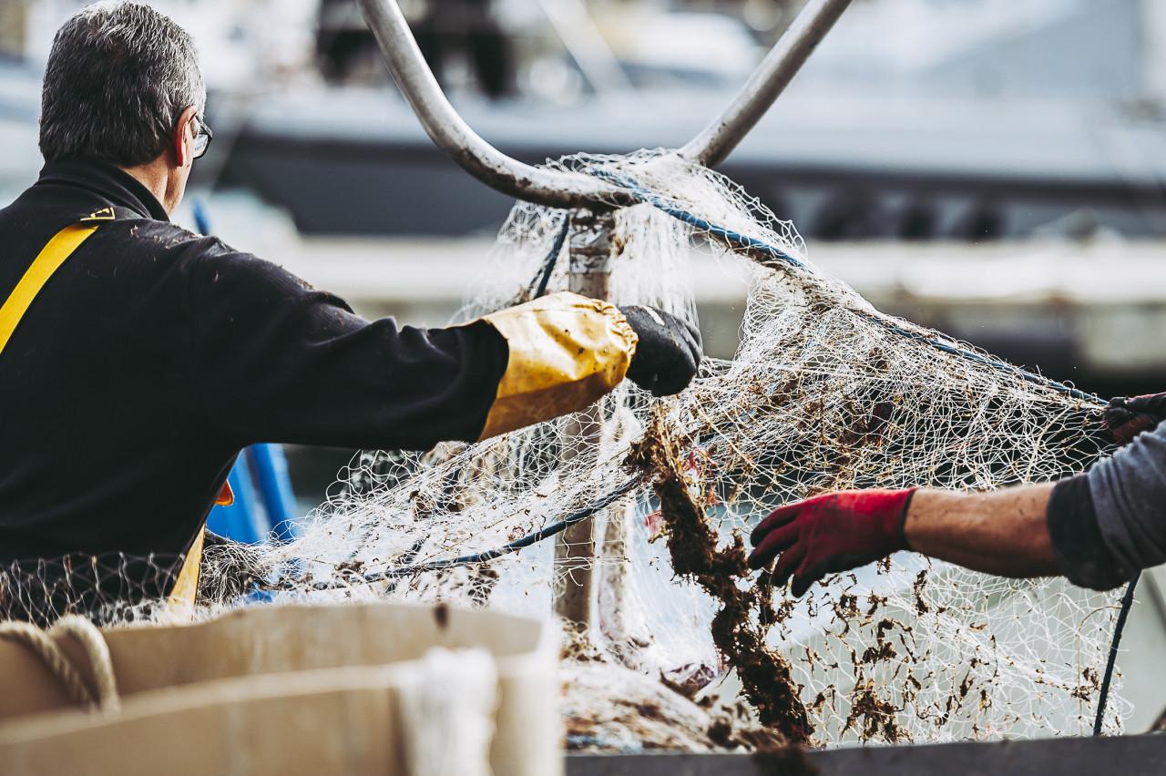 Prise de mammifères marins dans les filets de pêche : l'État condamné