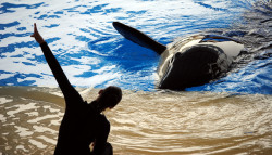 Cirques et delphinariums : la captivité d'animaux sauvages progressivement interdite