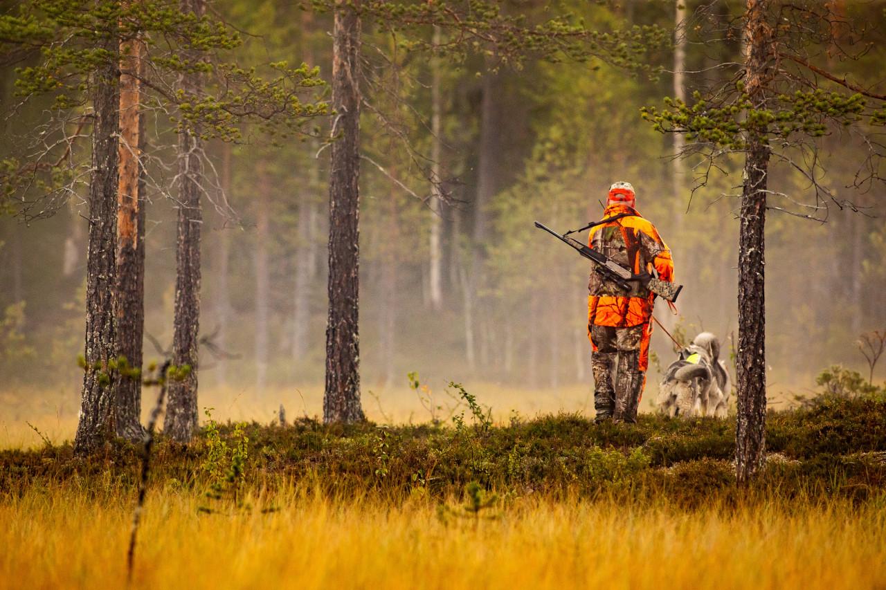 Des dérogations pour les chasseurs pendant le confinement