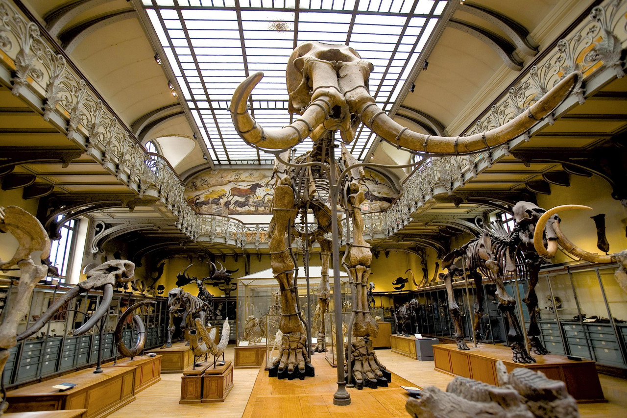 Participez à la restauration du plus grand mammouth de France !