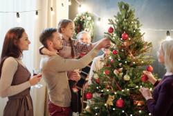 Les ventes de sapins de Noël sont autorisées