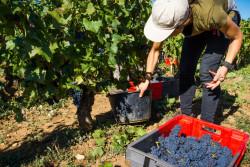 Covid-19 : une aide au logement pour les saisonniers du secteur agricole