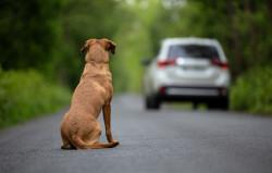 Un nouveau plan pour lutter contre l'abandon des animaux