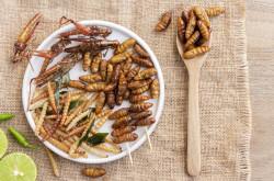 Les insectes arrivent dans nos assiettes
