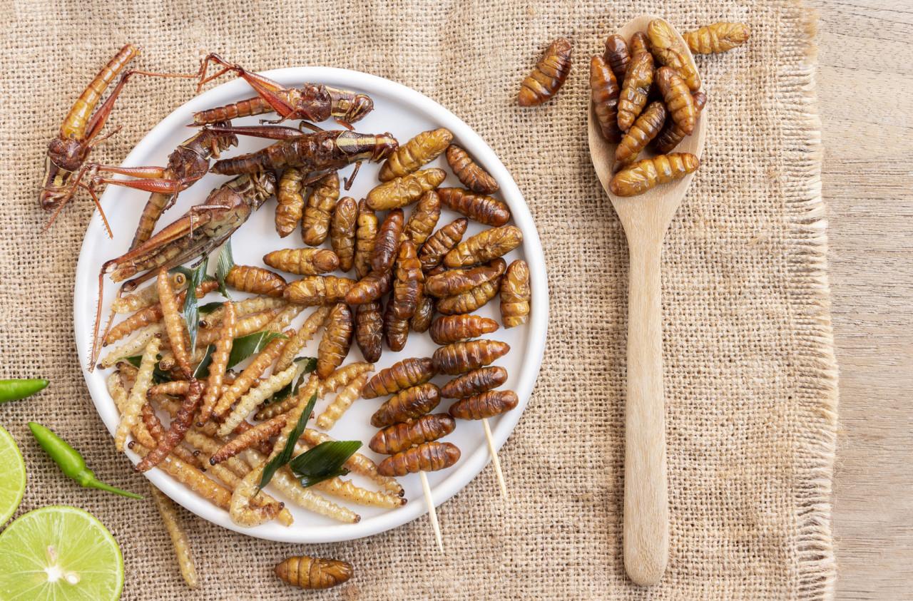 Les insectes bientôt dans nos assiettes : l'Europe a dit oui !
