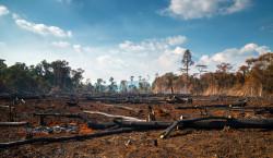 La déforestation continue de progresser dans le monde