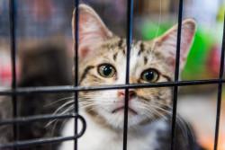 SPA : 3 000 animaux à la recherche d'un « plan sérieux » pour la Saint-Valentin