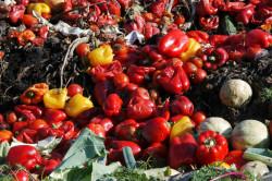 Selon l'ONU, 17 % de la nourriture disponible part à la poubelle