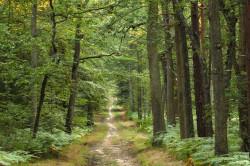 50 millions d'arbres bientôt plantés en France