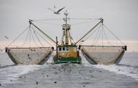 Bonne nouvelle pour la planète: la pêche électrique a été interdite par le Parlement européen