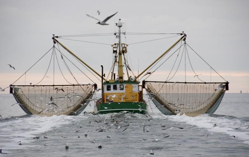 Bonne nouvelle pour la planète : la pêche électrique a été interdite par le Parlement européen