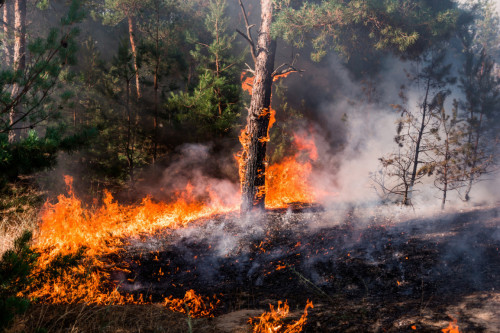 Feux de forêt : le gouvernement à l'origine d'une campagne nationale de prévention