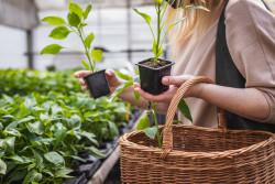Les clients sont désormais obligatoirement informés des plantes toxiques