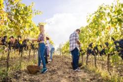 Salarié saisonnier : règles à respecter par l'employeur et droits des saisonniers prioritaires