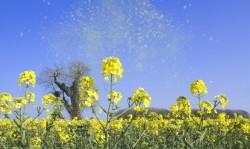 Allergique aux pollens : préconisations et bulletin allergo pollinique du 20 avril 2018