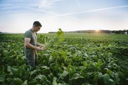 Le commerce équitable se développe de plus en plus dans le bio grâce à la forte demande des consommateurs