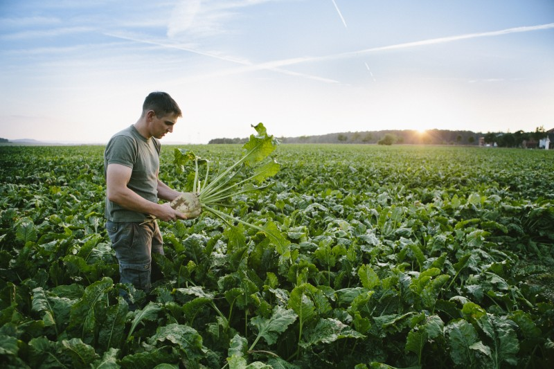 Les produits bio issus de plus en plus de filières de commerce équitable et inversement