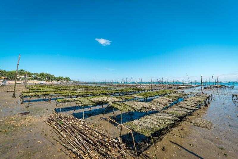 Huîtres, moules, coques, pétoncles du Bassin d'Arcachon temporairement interdit de consommation