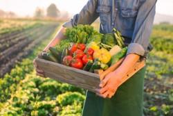 L'agriculture bio se développe : création de plus de 10 600 emplois sur ces 5 dernières années