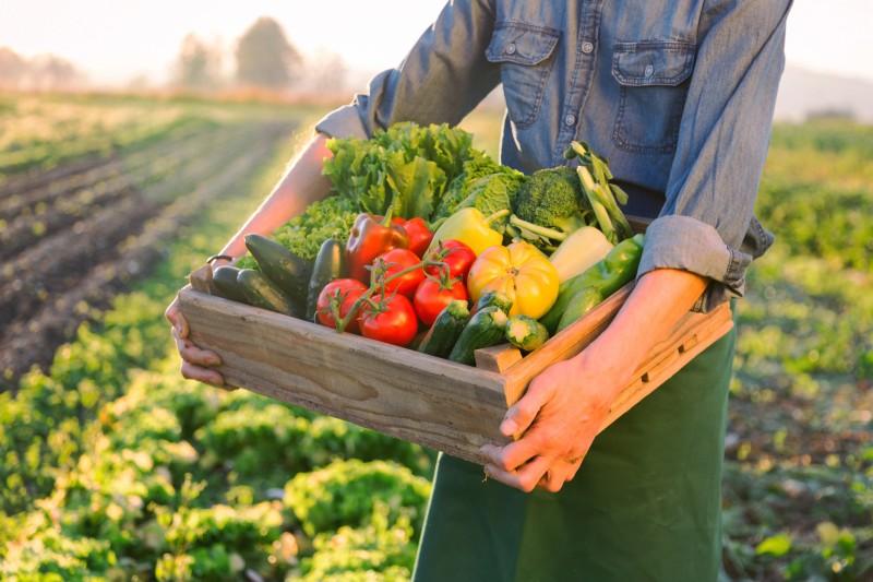 La filière bio progresse et crée des emplois dans l'agriculture, la distribution et la logistique en France