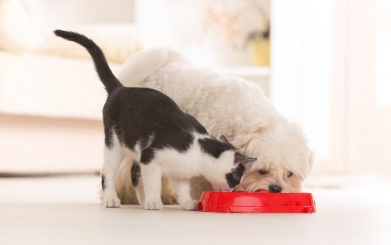 La malbouffe touche aussi les animaux de compagnie, notamment les chats et les chiens