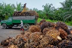 Culture de l'huile de palme : trouver des solutions durables pour la Nature et l'Homme