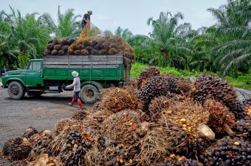 Huile de palme : la recherche de solutions durables