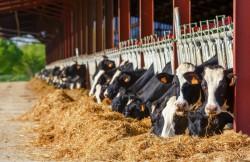 Engagements du ministre de l'Agriculture pour le bien-être des animaux d'élevage