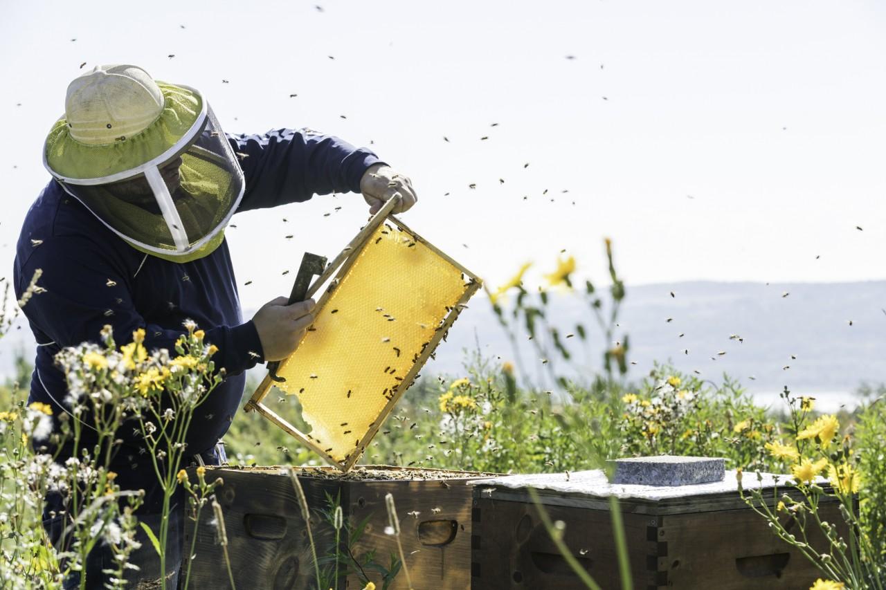 5 produits néonicotinoïdes dangereux pour les abeilles interdits depuis le 1er septembre 2018
