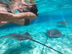 Se protéger des piqûres d'animaux marins (méduse, serpents de mer, murène)
