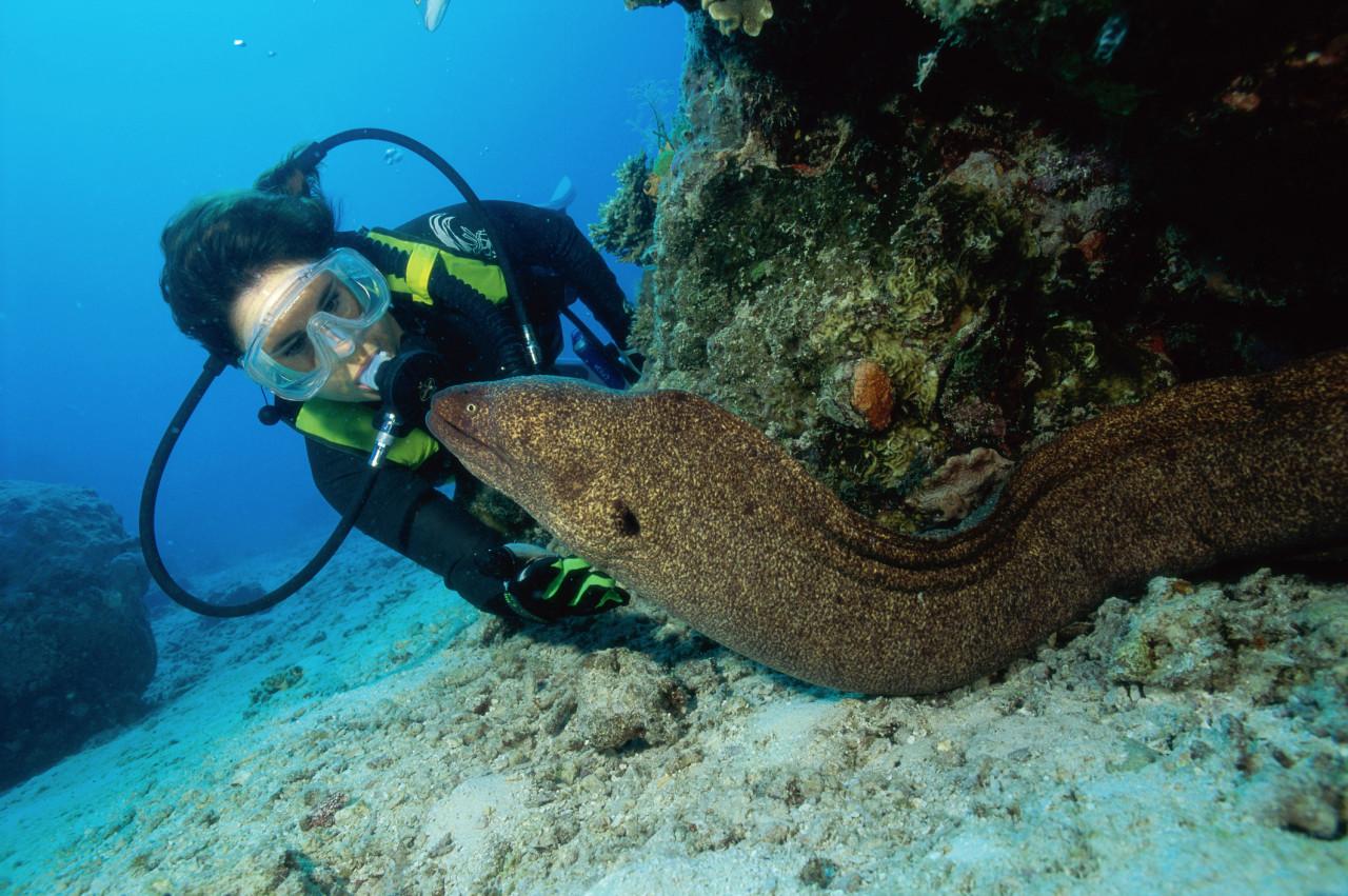 Animaux marins venimeux : Comment se protéger ?