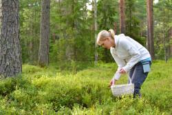 Ne pas confondre plantes comestibles et toxiques